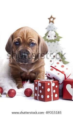 Christmas Dog, young gift