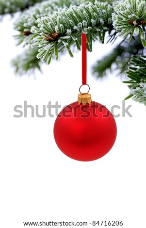 Christmas evergreen spruce tree and red glass ball on snow background