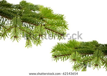 Christmas evergreen spruce tree on white