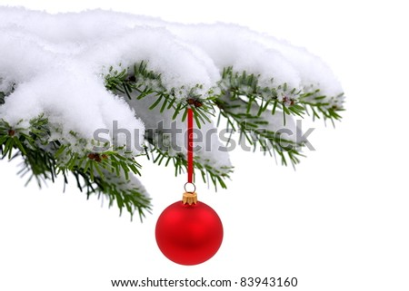 Christmas evergreen spruce tree  with fresh snow and red glass ball on white