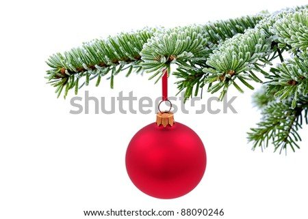 Christmas  evergreen tree and red glass ball
