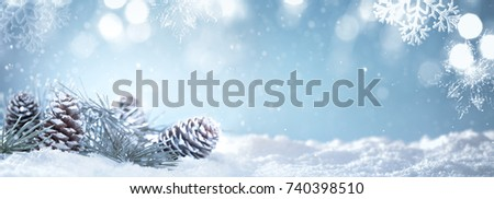 Christmas fir branch on snow