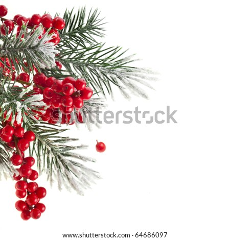 Christmas fir twig with red berries card with copy space isolated on white