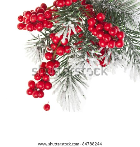 Christmas fir twig with red berries isolated on white