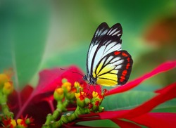 Christmas flowers & butterfly