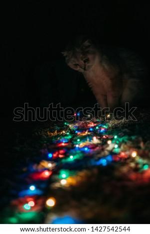 Christmas garland glows on the floor #1427542544