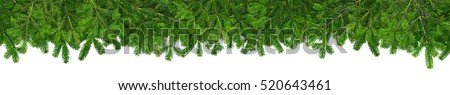 christmas garland super wide panorama banner with undecorated pure green natural  fir branches without lights baubles and xmas decoration isolated on white background