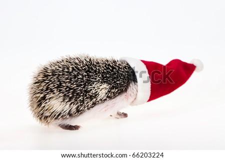 christmas hedgehog - stock photo