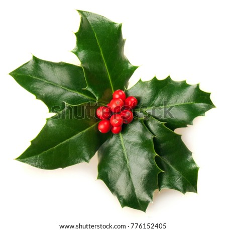 Christmas Holly Isolated on White #776152405