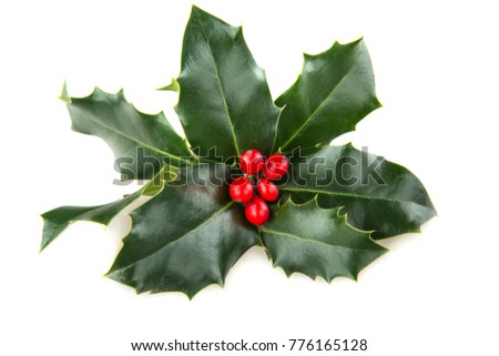 Christmas Holly Isolated on White #776165128