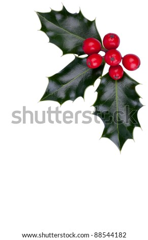 Christmas holly with red berries in the corner isolated on white