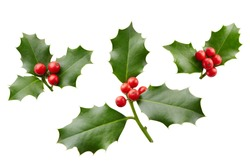 Christmas Holly With Red Berries. Traditional festive decoration. Holly branch with red berries on white.