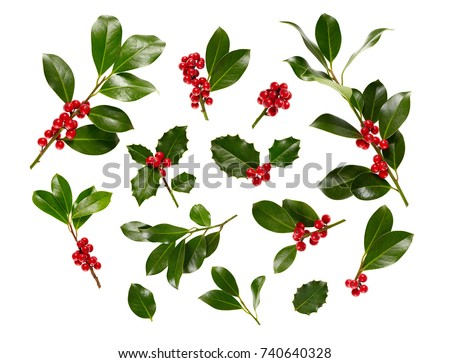 Christmas Holly With Red Berries. Traditional festive decoration. Holly branch with red berries on white. #740640328