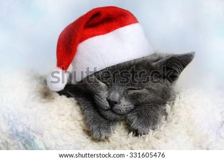Stock Photo christmas kitten