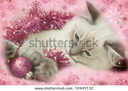 Christmas kitten - stock photo