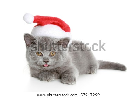 Christmas kitten in a red, New Year's hat. Isolated on a white background