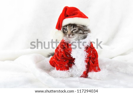 Christmas kitten in Santa stocking hat and scarf isolated on white
