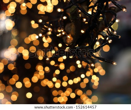 christmas lights hanging in a tree creating a wonderful bokeh of lights