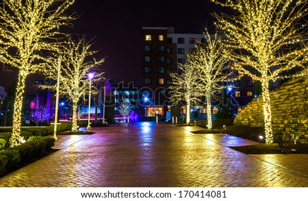 Christmas lights on trees along a path in National Harbor, Maryland at night. #170414081
