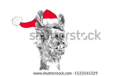 Christmas llama wearing santa claus hat in funny holiday illustration, hand drawn cute animal cartoon for holiday graphic art clip art designs