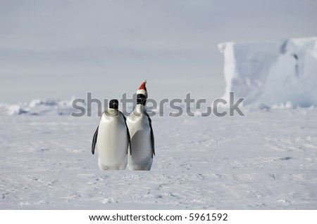 Christmas on ice with a penguin pair