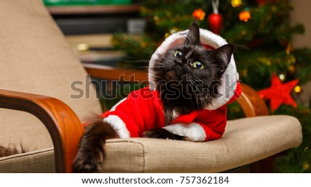 Christmas picture of black cat in Santa costume in armchair
