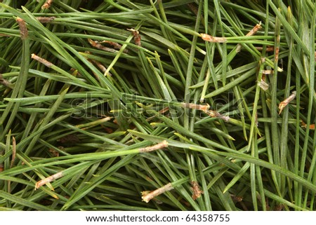Christmas pine texture, for backgrounds or textures