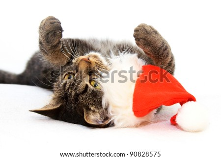 Christmas playful cat lying on the back with red Santa Claus cap near by