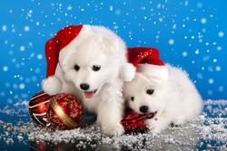 christmas puppies white Pomeranian Spitz wearing a santa hat