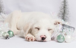 Christmas puppies with decorations