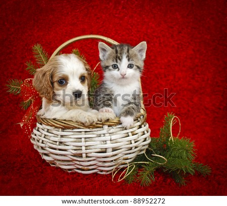 Christmas puppy and kitten sitting in a basket together on a red background, with copy space.