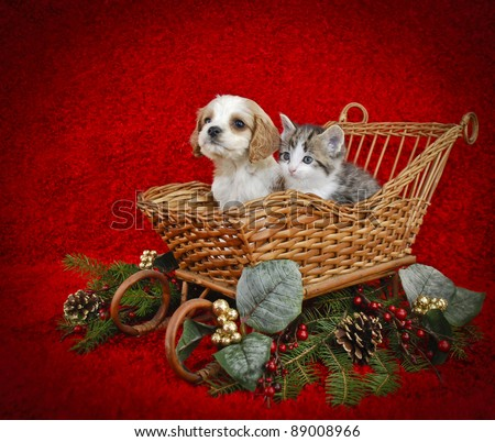 Christmas puppy and kitten sitting in a sled with copy space on a red background.