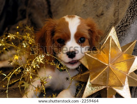 Christmas Puppy chewing on a star