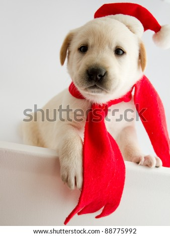 Christmas puppy in a Santa hat