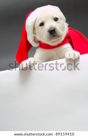 Christmas puppy in a Santa hat with empty border - space for text