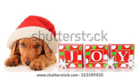 Christmas puppy wearing a Santa hat and JOY ornament.