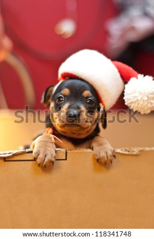Christmas  puppy with Santa hat
