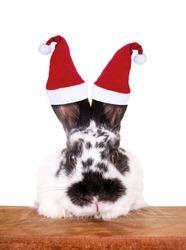 Christmas rabbit with santa claus hat