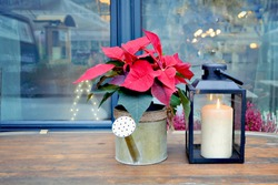 Christmas red flower poinsettia in tin watering pot and latern with candle standing on table. Christmas winter decoration. Christmas card.