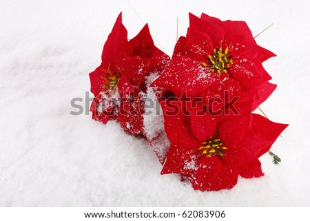 Christmas red poinsettias background over snowflake background