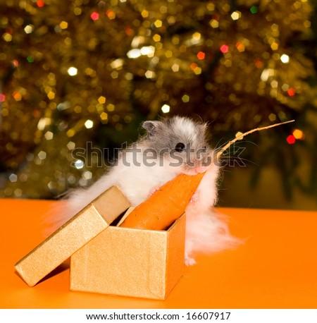 Christmas's gift for curiosity little hamster