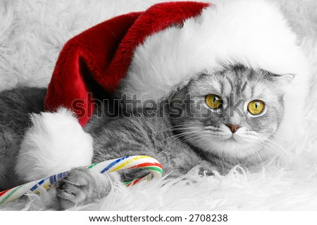 Christmas Santa cat with candy