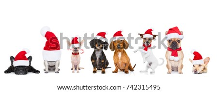 christmas  santa claus row of dogs isolated on white background,  with   funny  red holidays hat #742315495