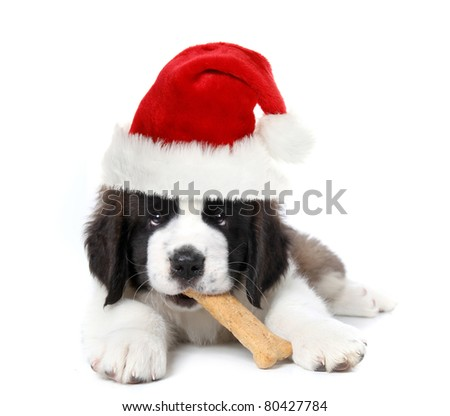 Christmas Santa Clause Saint Bernard Puppy - stock photo