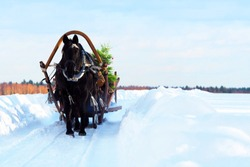 Christmas sleigh with one black horse running on white snow. Preparing for the new year. A horse harnessed to a sled carry a the festively decorated Christmas tree