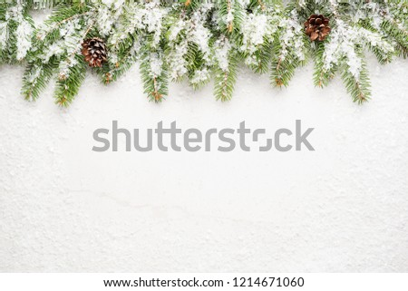 Christmas snow-covered branches on a light gray background. New Year's background.