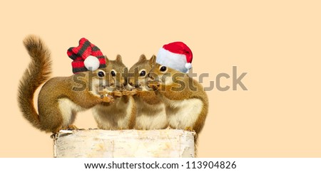Christmas.  Squirrels on a birch log sharing some sunflower seeds, the two boys wearing Christmas hats, with copy space. Part of a  series. - stock photo