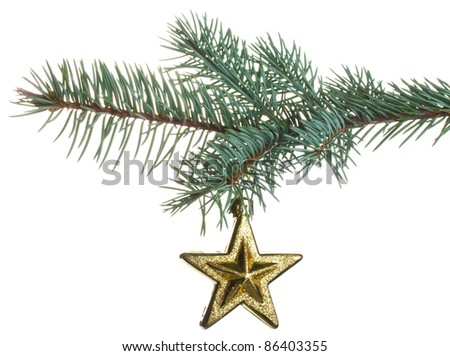 christmas star on fir branch