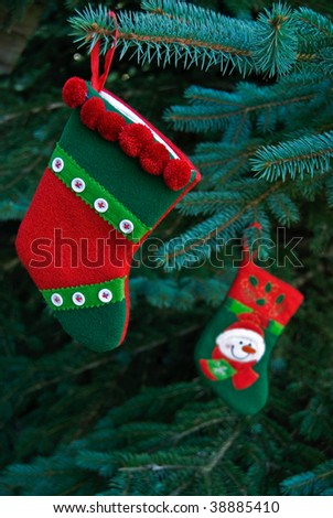 christmas stocking on blue spruce pine