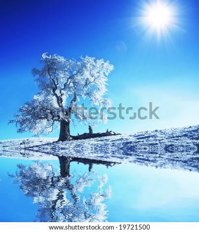 Christmas theme- frozen trees - stock photo